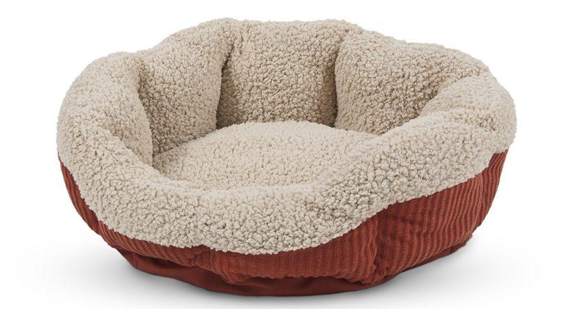 Aspen Pet Self-Warming Cat Bed Review