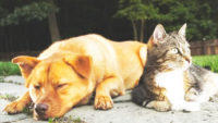 The Best Flea Treatment For Dogs and Cats