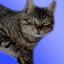 Top 4 Best Cat Litters Review
